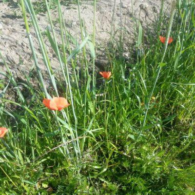 Oranje bloemen langs het fietspad